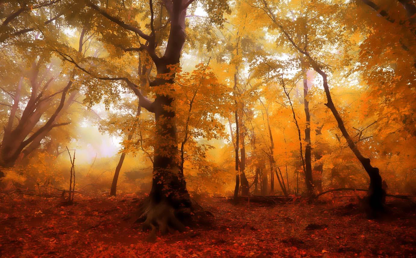 Jesień w Zapomnianych Krainach